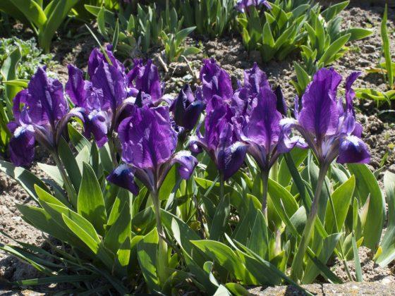 Igazi tavasz tombol a Várhegy tetején